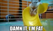 damn fat hamster rodent slide animal pet funny pics pictures pic picture image photo images photos lol