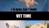 bath time vet dead dog just kidding animal funny pics pictures pic picture image photo images photos lol