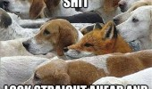 deep shit dog fox hunt animal funny pics pictures pic picture image photo images photos lol