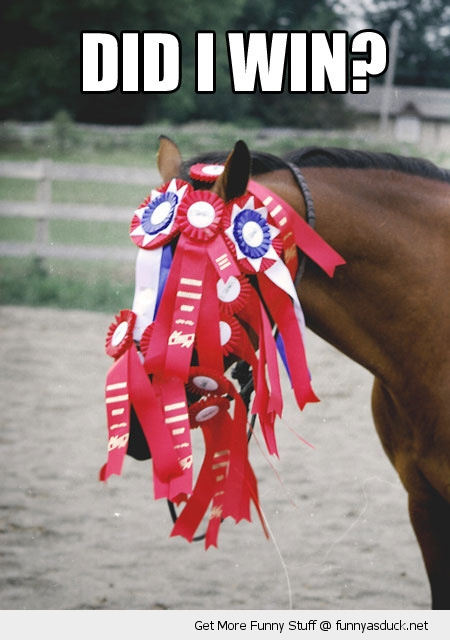 did i win horse show animal rosettes face funny pics pictures pic picture image photo images photos lol