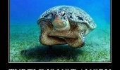 angry disappointed turtle ocean animal funny pics pictures pic picture image photo images photos lol