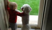 one day pee dog baby handle door funny pics pictures pic picture image photo images photos lol