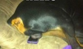 dog balls phone animal funny pics pictures pic picture image photo images photos lol