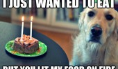 birthday dog food on fire animal funny pics pictures pic picture image photo images photos lol