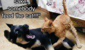 cat biting dog feed the animal funny pics pictures pic picture image photo images photos lol