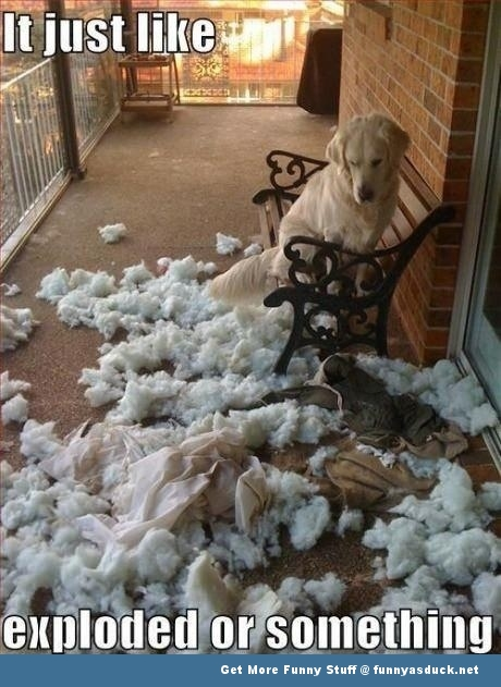 dog cushion mess exploded funny pics pictures pic picture image photo images photos lol