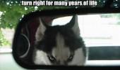 funny-dog-car-vet-husky-evil-pics