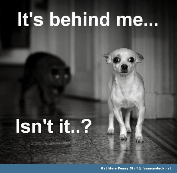 dog cat behind me animal lolcat funny pics pictures pic picture image photo images photos lol
