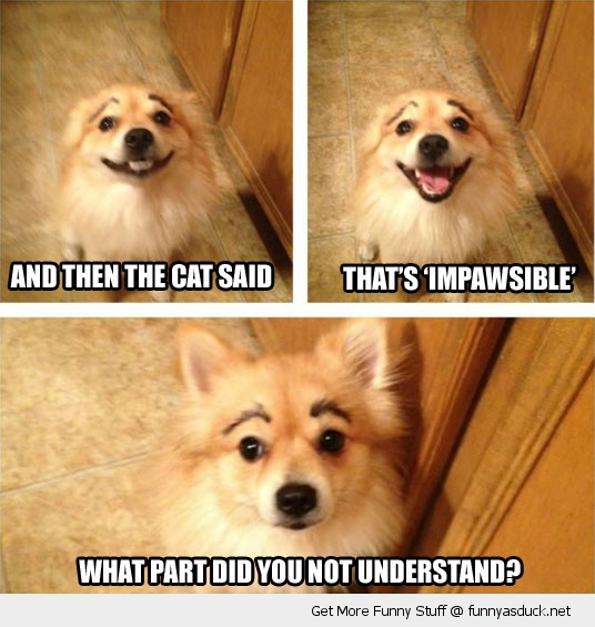dog cat joke animal impawsible eyebrows funny pics pictures pic picture image photo images photos lol