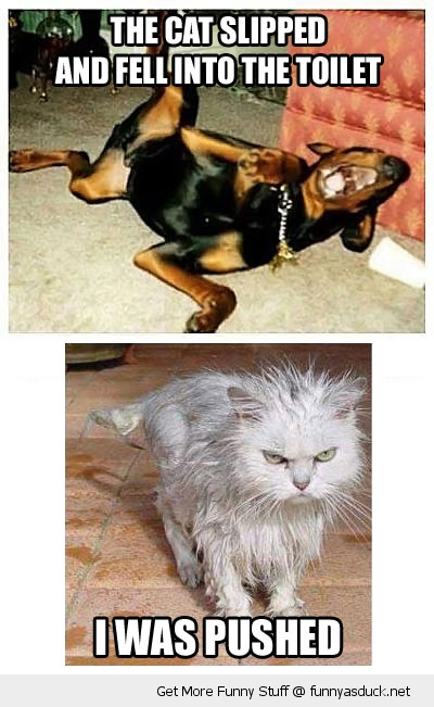dog cat toilet wet pushed animals funny pics pictures pic picture image photo images photos lol