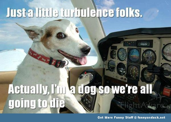dog animal flying plane die funny pics pictures pic picture image photo images photos lol
