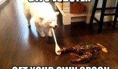 gtfo lobster dog spoon animal funny pics pictures pic picture image photo images photos lol