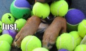dog tennis balls heaven animal funny pics pictures pic picture image photo images photos lol