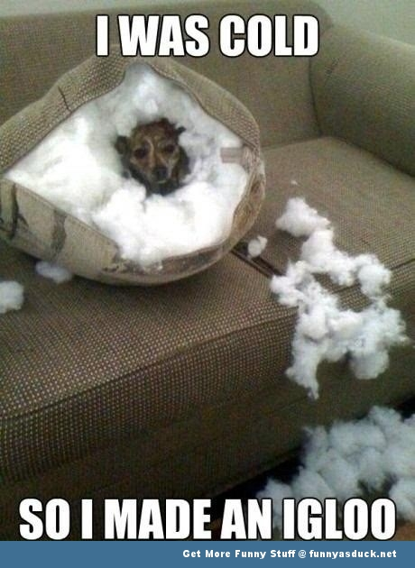 dog box igloo animal funny pics pictures pic picture image photo images photos lol