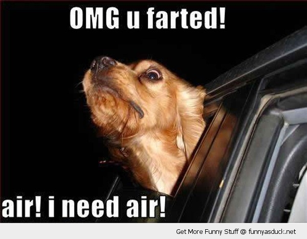omg you farted dog car animal funny pics pictures pic picture image photo images photos lol