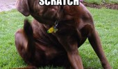 itch a scratch dog animal funny pics pictures pic picture image photo images photos lol