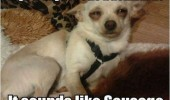 high dog animal jesus sausage funny pics pictures pic picture image photo images photos lol