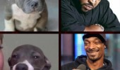 snoop dogg ice t dog animal lookalike funny pics pictures pic picture image photo images photos lol