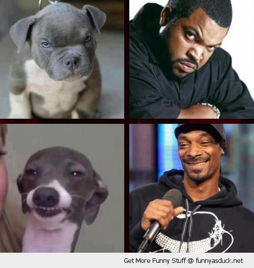 funny-dog-lookalikes-snoop-ice-t-pics.jp