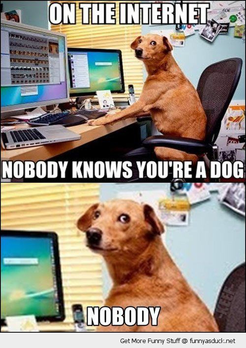 dog animal internet nobody knows funny pics pictures pic picture image photo images photos lol