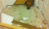 dog animal broken door panicked funny pics pictures pic picture image photo images photos lol