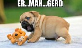 ermahgerd dog pug toy animal funny pics pictures pic picture image photo images photos lol