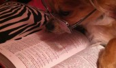 dog studying ball book animal funny pics pictures pic picture image photo images photos lol