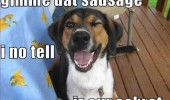 dog sausage secret animal funny pics pictures pic picture image photo images photos lol