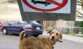 dog cigar wine skateboard sign wait here funny pics pictures pic picture image photo images photos lol