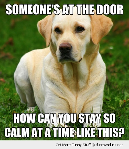 someones at the door dog animal funny pics pictures pic picture image photo images photos lol