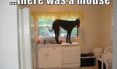 dog kitchen worktop mouse animal funny pics pictures pic picture image photo images photos lol