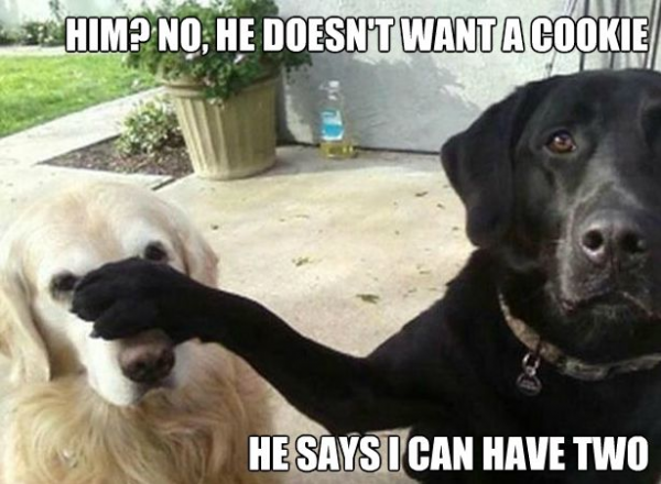 dogs animals cookies funny pics pictures pic picture image photo images photos lol