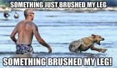 dog swimming brushed leg animal funny pics pictures pic picture image photo images photos lol