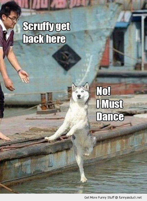dog i must dance water animal funny pics pictures pic picture image photo images photos lol