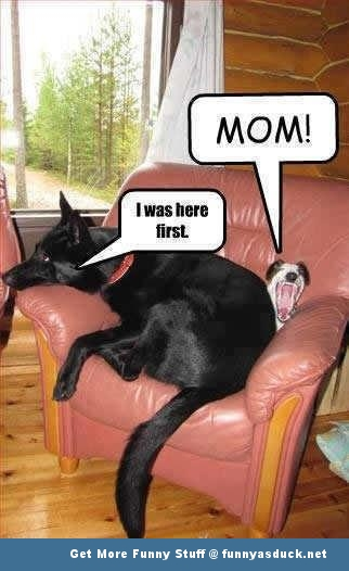 dogs animals on chair mom funny pics pictures pic picture image photo images photos lol