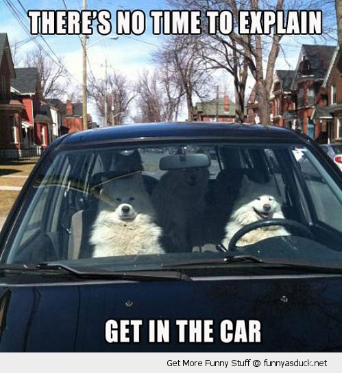 dogs get in car explain animal funny pics pictures pic picture image photo images photos lol