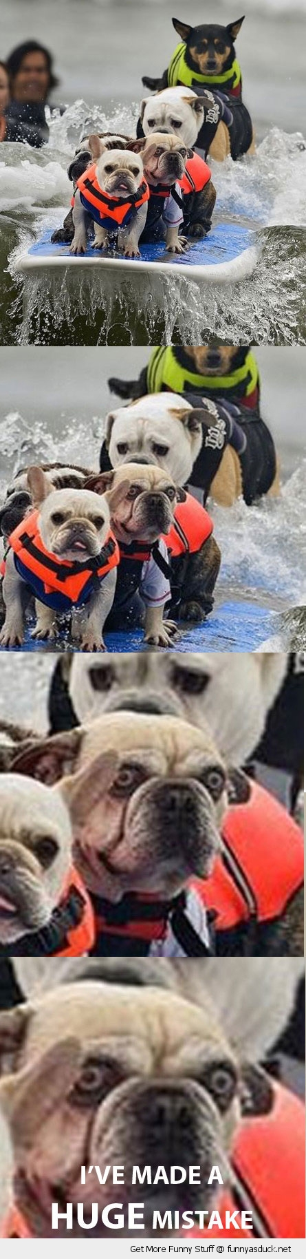 dogs on surfboard huge mistake scared animals funny pics pictures pic picture image photo images photos lol