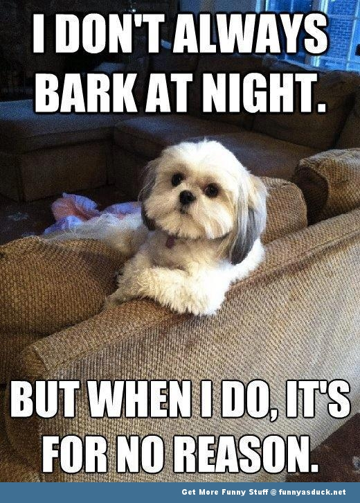 Dog animal bark at night meme funny pics pictures pic picture image