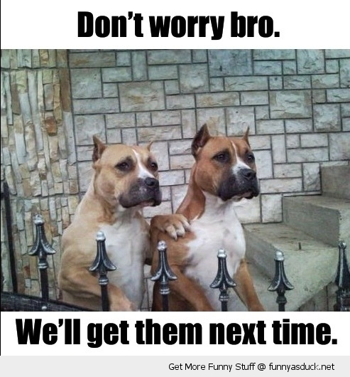 dont worry bro dogs pitbulls animal funny pics pictures pic picture image photo images photos lol