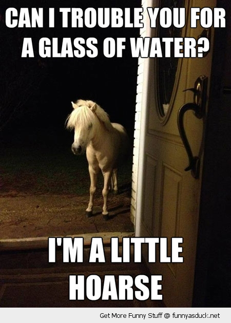 little horse hoarse water door animal funny pics pictures pic picture image photo images photos lol