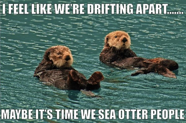 drifting apart otters aniamls water funny pics pictures pic picture image photo images photos lol
