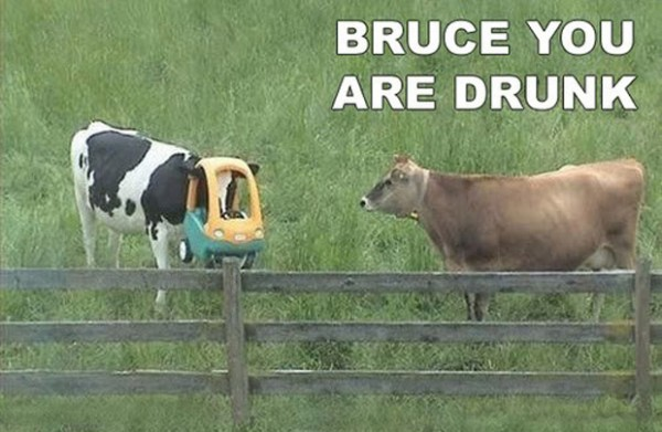 are you drunk cow animal funny pics pictures pic picture image photo images photos lol
