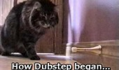 how dubstep began cat lolcat door stopper funny pics pictures pic picture image photo images photos lol