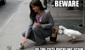 beware cute duckling scam pick pockets birds funny pics pictures pic picture image photo images photos lol