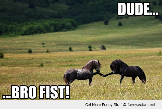 dude bro fist horses animals funny pics pictures pic picture image photo images photos lol