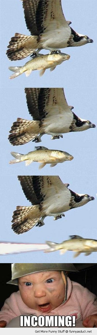 bird eagle fish missle incoming baby animal funny pics pictures pic picture image photo images photos lol