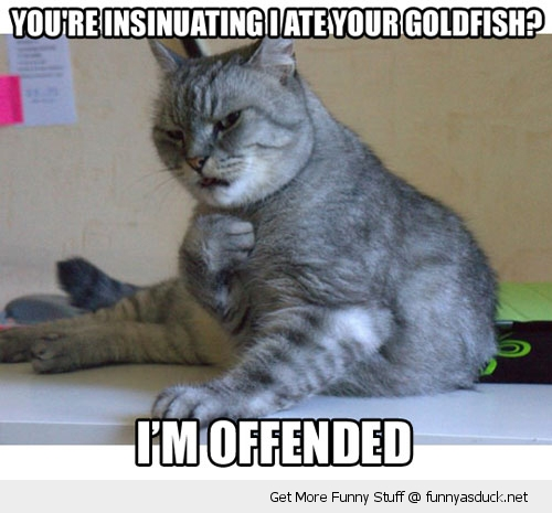 cat lolcat offended animal fish funny pics pictures pic picture image photo images photos lol