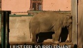 elephant irrelephant sad animal funny pics pictures pic picture image photo images photos lol