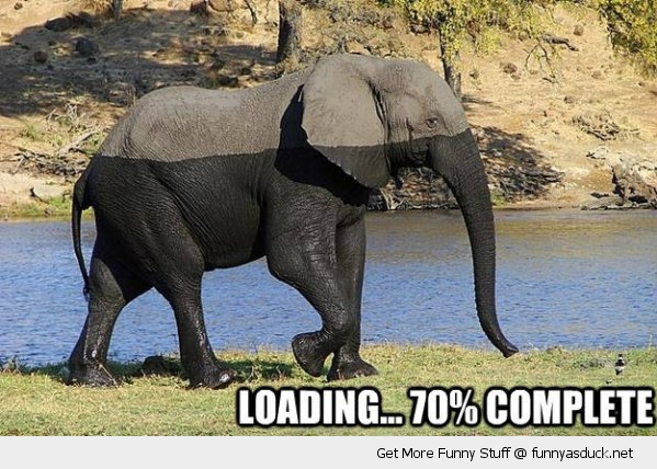 elephant loading animal africa water funny pics pictures pic picture image photo images photos lol