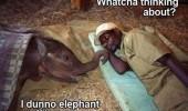 funny-elephant-thinking-man-sleeping-pics